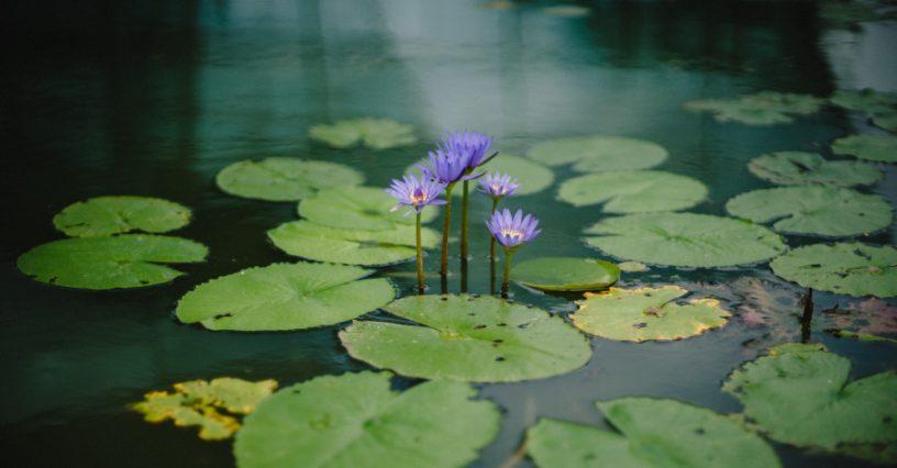 Akú údržbu vyžaduje záhradné jazierko